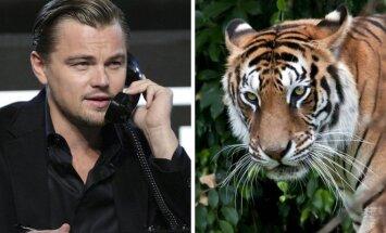 Leonardo di Caprio ir Bengalinis tigras (Reuters ir Shutterstock nuotr.)