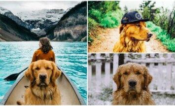 Šuo kalnuose