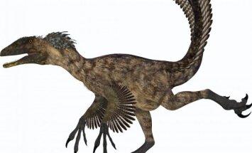 Velociraptorius