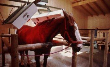 Žirgas, besišildantis soliariume