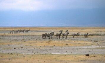 Ngorongoro nacionalinis parkas