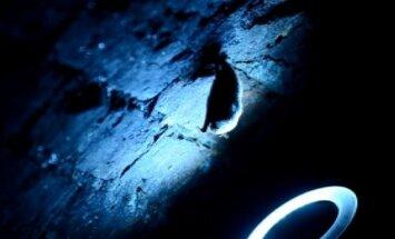 Kviečia susipažinti su šikšnosparniais