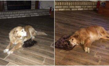 Šuo mėgaujasi dovanėle