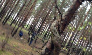 Miškas