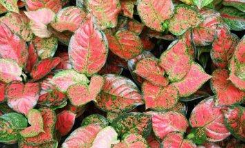 15 geriausiai orą valančių augalų