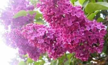 """""""Garden Style"""": ką gali parodyti lietuvio kiemas"""
