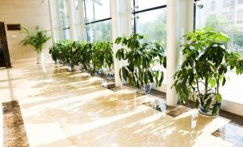 Kambariniai augalai teigiamai veikia savijautą