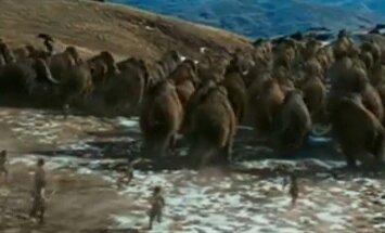 Buvo laikai, kai Lietuvoje ganėsi mamutai