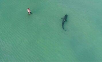 Dronas užfiksavo Majamyje prie poilsiautojų priartėjusį tigrinį ryklį