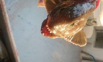 Lietuvio sugauta žuvis