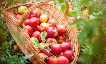 Laiko patikrinti būdai, kaip namų sąlygomis ilgiau išlaikyti vaisius ir uogas