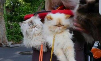 Su katėmis keliaujantis japonų senjoras vykdo svarbią misiją
