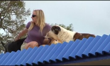 Pora su augintiniais nuo uragano Marija gelbėjosi įsikurdami ant namo stogo