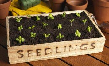 Patarimai, kaip sėkmingai pradėti daiginti sėklas namuose
