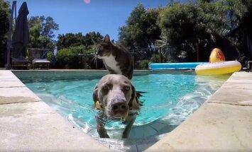 Katinas plaukia ant šuns