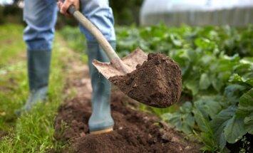 Saugome augalus nuo kenkėjų: veiksmingos natūralios priemonės
