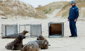 Į jūrą paleidžiami jūrų ruoniai
