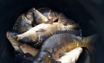 Nacionalinės akvakultūros ir žuvų produktų gamintojų asociacijos nuotr.