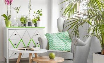 Sužinokite, kaip komplimentai ir patyčios veikia kambarinius augalus