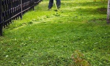 Patarimai, kaip pasigaminti skystų trąšų iš piktžolių