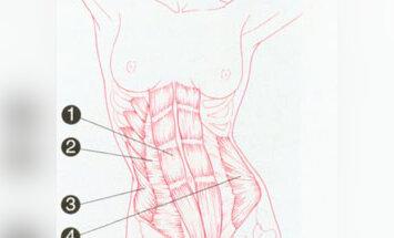 Pilvo raumenys