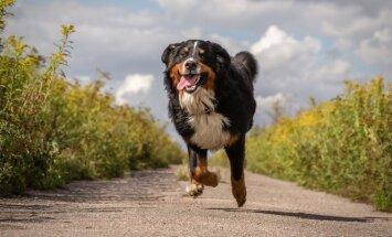 Berno zenenhundas