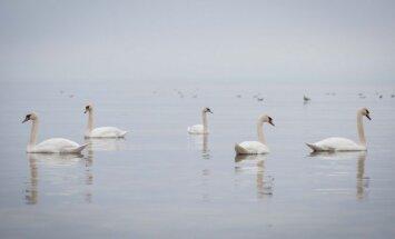 Įspėja dėl Lietuvoje žiemojančių paukščių: pagalbos reikia toli gražu ne visiems