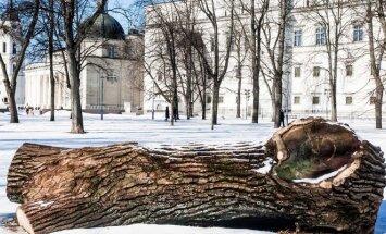 Iškirsti medžiai