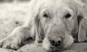 Senas šuo
