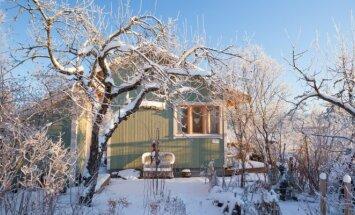 Kaip paruošti vaismedžius, kad jie ištvertų žiemą?