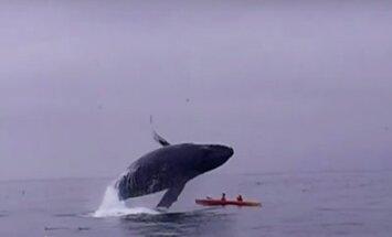 Banginis skrieja virš žmonių