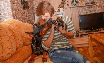 Išgelbėti šuniukai