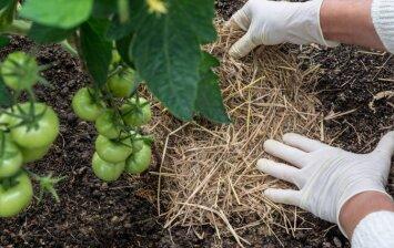 Mulčiavimas: kodėl verta naudoti mulčią savo darže?