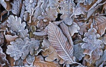 Pats metas ruoštis: kaip apsaugoti augalus žiemą?
