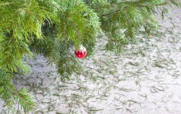 Kaip pašalinti kalėdinės eglutės spyglius iš kilimo?