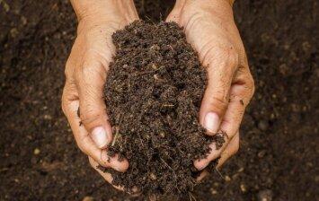 Dirvožemio priežiūra nuėmus derlių