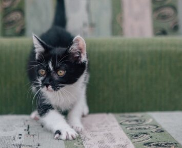 Ši miela katytė ieško namų