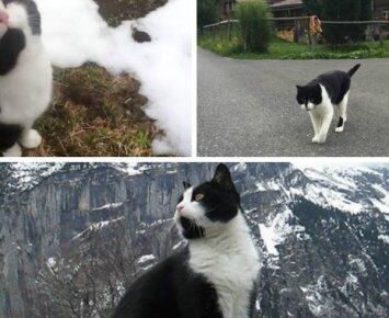 Interneto sensacija: katė išgelbėjo turistą nuo žūties