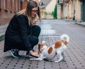 Iš prieglaudos paimtas šuo tapo Lietuvoje graibstomu modeliu