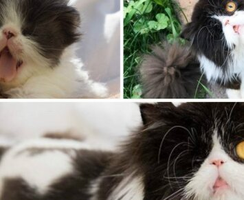 Spagetė – katytė, praradusi akį, tačiau ne pasitikėjimą savimi