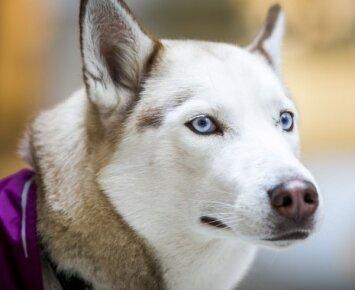 Šuns atmintis: ką prisimena jūsų augintinis?