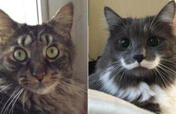 Gamta krečia pokštus: kačių kailį puošia stebinančios dėmės