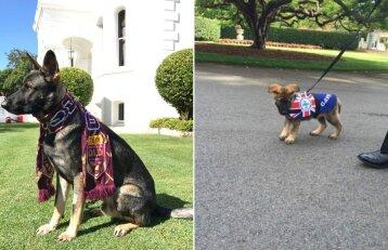 Dėl savo mielumo šis šuo buvo atleistas iš darbo, bet iš karto gavo naujas pareigas