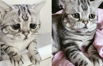 Katės liūdesys sulaukė populiarumo: internautai stebisi jos išvaizda