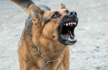Pateikė išvadas dėl pareigūnų, šaudžiusių į šunis: tokią teisę jie turėjo