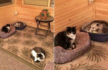 Moteris galvojo, kad augina katę: nustebo sužinojusi, kad tai – oposumas