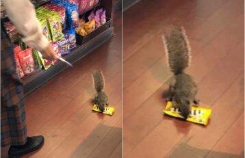 Nufilmuota įžūli vagystė: voverė už pirkinius neketino susimokėti