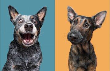 Fotografės dėmesį prikaustė šunys: kiekvienas jų turi savo charakterį