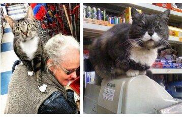 Katės, kurioms nė motais, kad jūs apsipirkinėjate