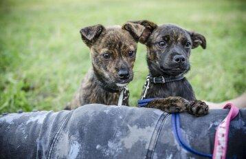 Radviliškio rajone vyras nukankino du šuniukus